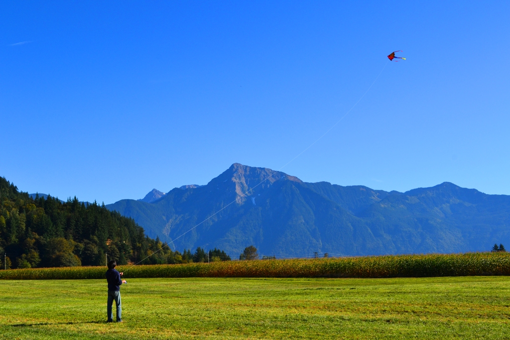 kite in the field