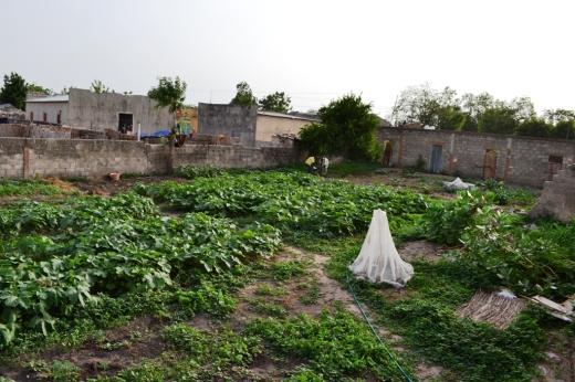 garden_after