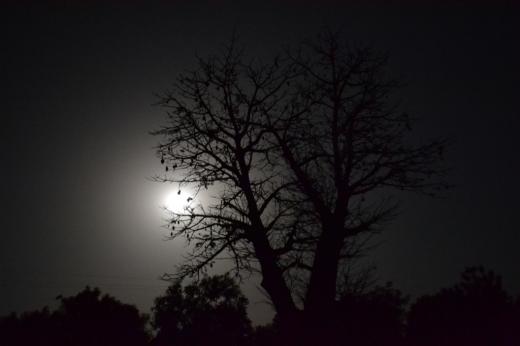 Full moon and baobab