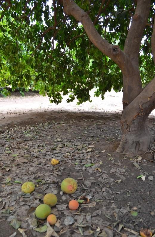 isra_trees 2