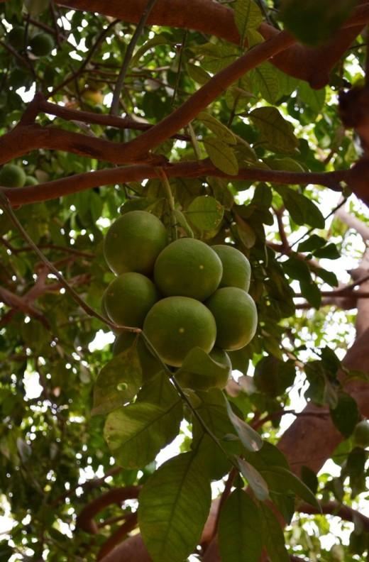 isra_trees 3