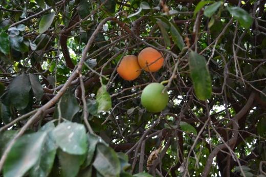 isra_trees 4