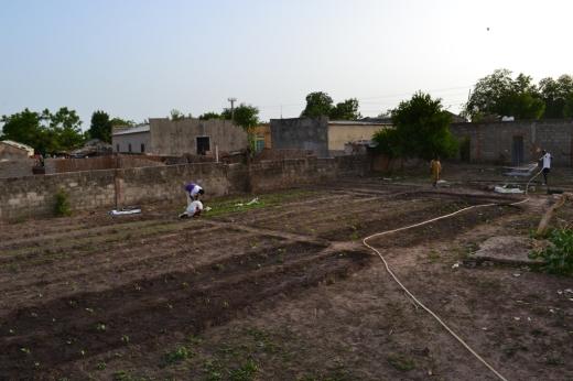 jardin_debut