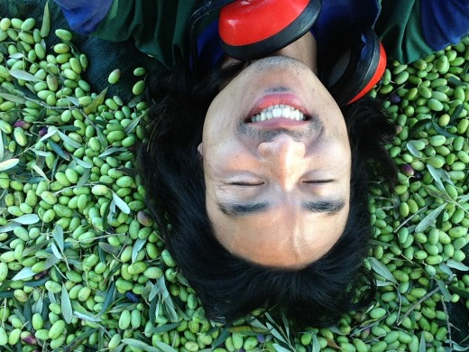 olive dreams